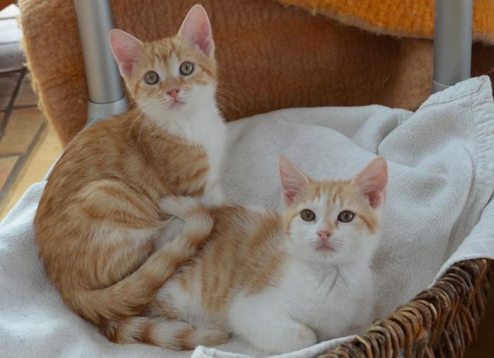 Willi und Linus